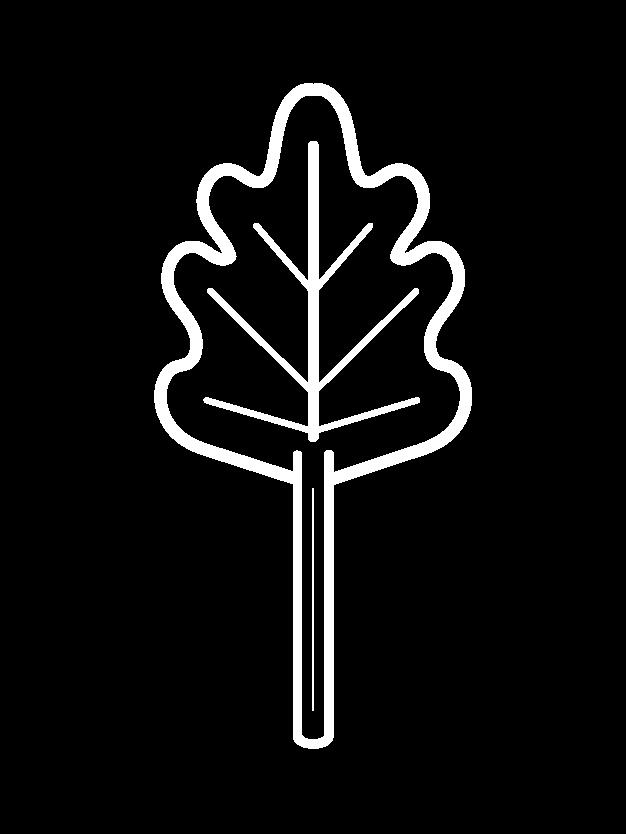 drawing rhubarb